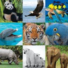 Endangered Species, 9 of many thousands. Take your pick, devote your life. They all need a Jane Goodall.