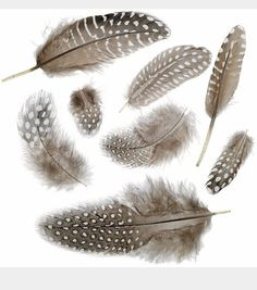 Quail feathers for Granddaddy's tattoo