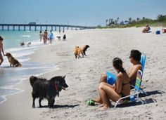 Brohard Beach and Paw Park | Visit Sarasota County | Discover Natural Sarasota