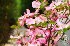 Ogród Rezydencja Luxury Hotel****. Kwiaty. / Garden. Flowers. #RezydencjaHotel #ogród #garden #green #gardener #growsomethinggreen #hotel #besthotel #Poland #PiekaryŚląskie