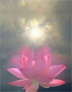 Flor de lotus.