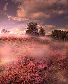 ~~misty posbank ~ Nationaal Park Veluwezoom, Rheden, Netherlands by Patrick Strik~~