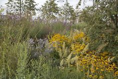 Sarah Price Landscapes » Olympic Gardens North America