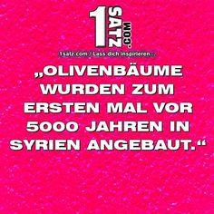 #OLIVENBÄUME #WURDEN #ZUM #ERSTEN #MAL #VORJAHREN #IN #SYRIEN #ANGEBAUT  Bisher keine Bewertungen Bewerte diesen BildsatzBild/Motiv/Objekt           Farbe/Effekt/Verlauf           Satz/Sinn/Wert           Rechtschreibung           Satz passt zu Bild           Gesamteindruck 012345678910   http://bit.ly/1UON6Od