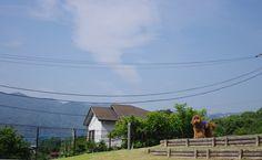 淡い空 | 2013.7.13