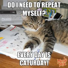 Like this if you think everyday should be Caturday.