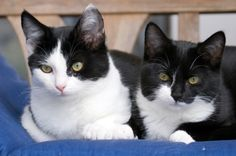 Why your cats may not be getting along. Why is it that some cats can live together peacefully but there is constant conflict with others? This article explains a couple of the common mistakes we make when setting up our multicat home.