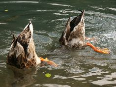 Synchronized swimming - Gold medal