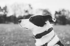 Rochester Family Photographer. Megan Rose Photography. Cobbs Hill Park, Rescue Dog, Border Collie Photoshoot, Border Collie Mix, Dog Photoshoots