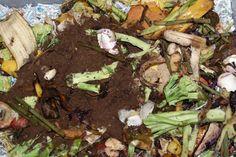 Composting: Teachers Love It—and It's Saving Schools Money