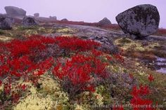 A fall drive along the Lighthouse Route towards Peggy's Cove, reveals a diverse granite landscape in Nova Scotia, Canada. Wonderful Places, Beautiful Places, Amazing Places, Places To Travel, Places To Visit, Natural Architecture, City By The Sea, Atlantic Canada, Top Soil