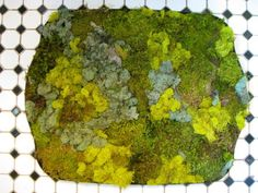 Evoke the forest in your bathroom by creating this cool moss mat.