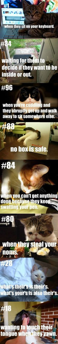 Being a cat owner. Yep, this is accurate.