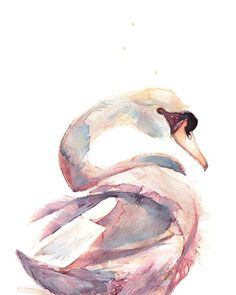 Swan Floating #swan #floating #bird #nature #wild #creature #watercolour #watercolor #painting #art #illustration #drawing #graphite #expression #catgraff