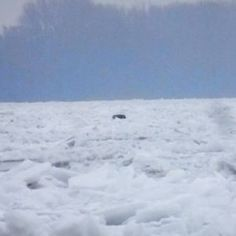 Međunarodna rijeka Dunav okovana ledom ovih dana (4)