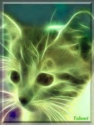 Neon Cat, Neon Lighting, Fractal Art, Neon Colors, I Love Cats, Psychedelic, Cool Art, Weird, Animals