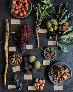 Fall Wild Foods // Persimmon, dandelion, Chinese chestnut, rosehips, hazelnuts, hickory nuts, wild grapes, black walnuts, acorns, burdock root, staghorn sumac // Chestnut School of Herbal Medicine