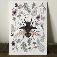 Stag Beetle A4 giclee print - violets mushrooms ferns