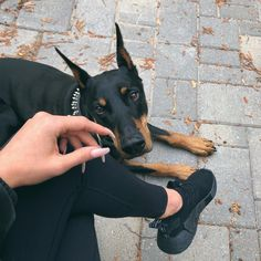 The Doberman Pinscher is among the most popular breed of dogs in the world. Known for its intelligence and loyalty, the Pinscher is both a police- favorite Cute Puppies, Cute Dogs, Dogs And Puppies, Doggies, Animals And Pets, Baby Animals, Cute Animals, Canis Lupus, Doberman Dogs