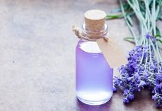 Natural Calming Remedies for Pets | petMD