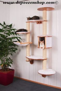 Scratching posts and Cathouses