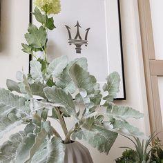 淡いホワイトグリーンのフェイクグリーンダスティミラーです . 普段はフラワーアレンジメントやグリーンの寄せ植えに使うことが多いのですが自宅をディスプレイすることを考えたらそのままでも十分綺麗じゃないかと . 本だけ花瓶に入れてみたら葉のボリュームとか大きさがちょうどいい感じでした . #インテリアグリーン #人工観葉植物 #グリーンのある暮らし #造花 #ダスティミラー #フェイクグリーン #造花ドットコム