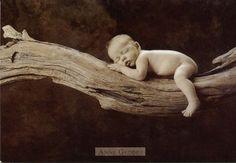 anne geddes | Imagenes de bebes de Anne Geddes, bellisimas.