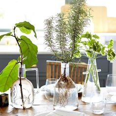 Gardening: 16 plants that take root and grow in water, without soil Plants Grown In Water, Water Garden Plants, Indoor Water Garden, Indoor Plants, Garden Yard Ideas, Garden Crafts, Garden Art, Hydroponic Gardening, Hydroponics