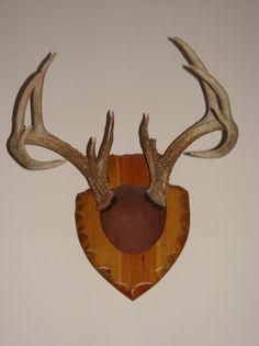 DIY Antler Mounting | Deer Hunting-Bear-Elk-Moose | Hot Spot Outdoors - Ice Fishing Reports & Hunting