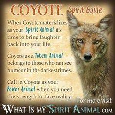 Coyote Spirit Guide Spirit Animal Quiz, Spirit Animal Totem, Animal Spirit Guides, Your Spirit Animal, Coyote Symbolism, Animal Symbolism, Native American Zodiac Signs, Native American Symbols, American Indians