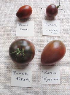 """""""Black"""" Heirloom Tomato Varieties - small"""