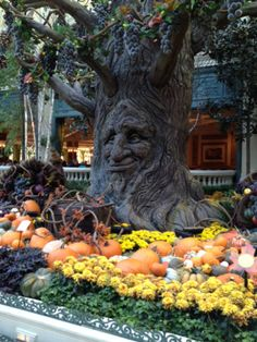 BELLAGIO CONSERVATORY AND BOTANICAL GARDEN, LAS VEGAS, NV .. AUTUMN AND THANKSGIVING ....the talking tree