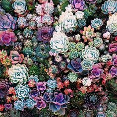 Gorgeous succulents!