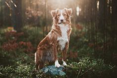 Quinca is bright and smart she-dog, she is very loyal and never gives up. She can be flirtatious and funny but most times she talks. She loves to run and sit in the woods and listen. no mate or crush. hunter. me.