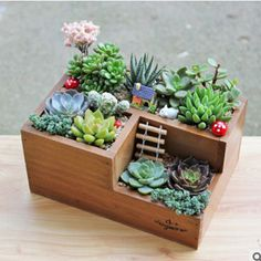 Multifunctional Wooden Desktop Office Supply Caddy and Succulent Planter Best Picture For Garden Planters bench For Your Taste You are looking for somet Succulent Pots, Cacti And Succulents, Planting Succulents, Planting Flowers, Indoor Succulent Garden, Succulent Ideas, Succulent Decorations, Succulent Display, Cacti Garden