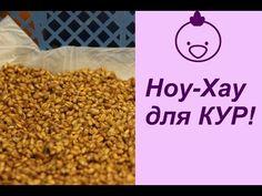 НОУ-ХАУ для КУР! И снова хитрости. | Raising Chickens for Eggs — Яндекс.Видео