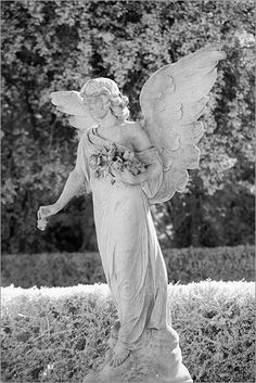 Everytime I see one of these I think they will kill me #weepingangels #whovian