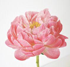 Roze geshilderde bloem....