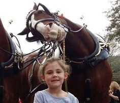 Funny pictures about When A Horse Photobombs You. Oh, and cool pics about When A Horse Photobombs You. Also, When A Horse Photobombs You photos. Animals And Pets, Funny Animals, Cute Animals, Beautiful Horses, Animals Beautiful, Majestic Animals, Funny Animal Pictures, Cute Pictures, Funny Photos