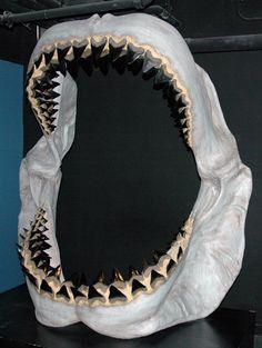 Carcharodon Megalodon Shark: Bite Force - 18 to 20 Tons - Picture of the Sharks Jaws! Megalodon Shark, Shark Jaws, Sharks, Coconut Jam, Prehistoric Age, Shark Mouth, Prehistory, Big Fish, Shortbread Crust
