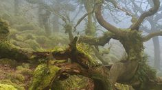 Reminds me of fangorn forest