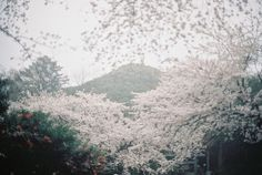 jollygoo: KAMAKURA VISIT FOR SAKURA IN THE RAIN STORM