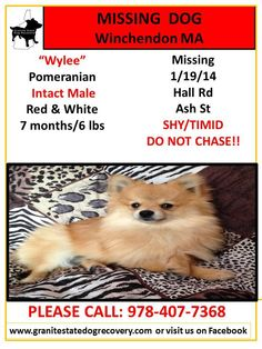 1/23/14-NO SIGHTINGS OF WYLEE PLEASE KEEP SHARING. We also found out he's only been with the family for a month so he is not familiar with area. Owners have put up or handed out over 100 flyers in the area.