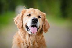 Câmara aprova projeto que proíbe órgãos públicos de matar cães e gatos - ANDA - Agência de Notícias de Direitos Animais