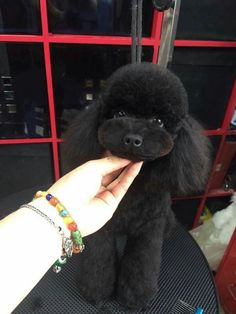 17 best ideas about haircuts on Dog Grooming Styles, Dog Grooming Salons, Poodle Grooming, Pet Grooming, Poodle Cuts, Poodle Mix, Poodles, Cortes Poodle, Poodle Haircut