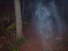 real scary ghost pictures | Ghost In The Camp