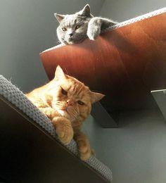 Półka dla kota,legowiska,luksusowe akcesoria - Cosy-and-Dozy - Legowiska dla kota