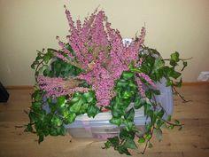 Efey og blomstererica i fin harmoni