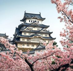 Cherry blossoms are the popular flower in China. They use it a lot to decorate exteriorly on the homes. As you can tell there is a traditional style home in the background that carries the styles of chinese architecture.