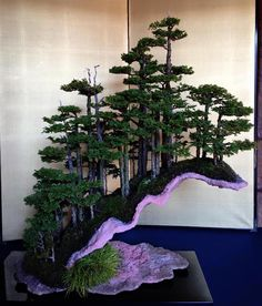 Growing bonsai from their seeds is essentially growing a tree from its seed. Get tips and guidelines on how to grow your first bonsai from its seed phase. Bonsai Tree Care, Bonsai Tree Types, Indoor Bonsai Tree, Bonsai Plants, Bonsai Garden, Succulents Garden, Air Plants, Cactus Plants, Ikebana